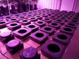 Control Reservoirs Connected to Octopot Sub Irrigation Auto Fill Systems Before Adding Cannabis Plants Indoor Grow Room